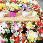 49 - 花のモナミ